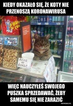 Polish Memes, Funny Memes, Jokes, Furry Art, Really Funny, Feel Better, Haha, Have Fun, Harry Potter