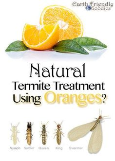 All natural termite treatment using orange oil! Orange oil is so effective for treating drywood termites that many companies are beginning to use it as an alternative to tenting and fumigation.  | Mosquito Repellent St. Joseph Mo
