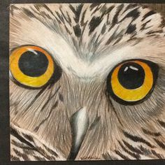 I gave students 4 pictures of owls printed on a single sheet of paper in black and white. We made inch view finders with construction p. Animal Art Projects, Classroom Art Projects, Winter Art Projects, 7th Grade Art, Seventh Grade, Middle School Art Projects, School Projects, Fall Drawings, Ecole Art