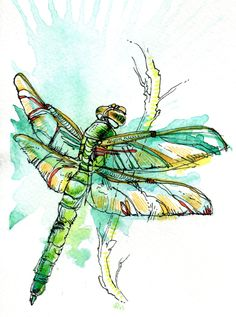 DragLibellulr à peindre aquarelleonflies by Abby Diamond, via Behance Dragonfly Painting, Dragonfly Art, Butterfly Art, Butterflies, Pen And Watercolor, Watercolor Animals, Natural Form Art, Gcse Art Sketchbook, Pen And Wash