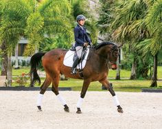 Correct Body Alignment to Ride Bending Lines~Every rider I teach knows that I am a stickler about body alignment. By keeping your seat in the correct position, you allow the energy to flow through your legs in the right way and go to your hands