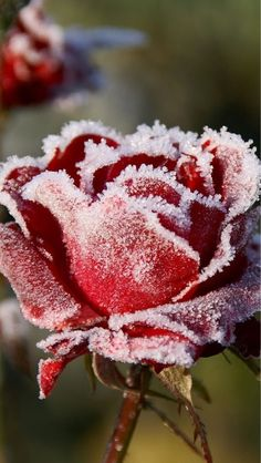 Winter brings frosts - and frost can make for some truly beautiful scenery. www.gardenlines.co.uk