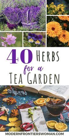 Healing Herbs, Medicinal Plants, Making Herbal Tea, Potager Bio, Homemade Tea, Growing Herbs, Growing Tea, Tea Blends, Edible Garden