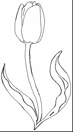 httpalphabrainsznetwonderful tulip coloring pages - Tulip Coloring Page