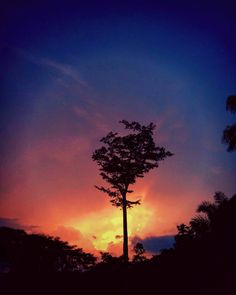 Tree of life...#gradient #gradientnation #tree #tall #high #sunset #fire #silhouette #shadows #background #mixture #hidden #picoftheday #instapic #instanature #cameroontrip #travel #equatorialforest #cameroon #trip #discover #infinite #limitless #peaceful #beautiful #lastnight #lastlight