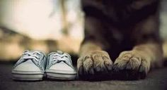 Baby shoes (of gender) & puppy paws! 15 Creative Pregnancy Announcement Ideas - We could totally do this with Ruger if he would sit still long enough! Creative Pregnancy Announcement, Baby Announcement With Dogs, Pregnancy Tips, Pregnancy Reveal Photos, Pregnancy Announcements With Dogs, Military Pregnancy Announcement, Gender Reveal Announcement, Gender Reveal Photos, Pregnancy Videos