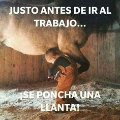 Un poco de humor por la mañana! Aquí mi chavo cambiando la llanta ponchada!  #stallionmexsearch #cuartodemilla #caballo #horseracing  #horseshoe #herradura #caballodecarreras #carrerasdecaballos#horsesofinstagram #caballosfinos #horse #riding #quarterhorse #aqha #horselife #cavalo #horserancing #nofilter #equestrian #horsephotography #equine #instahorse #horseride #thoroughbred #ponies #cutest #fitness #photooftheday #caballos #caballo #horse #horseracing #quarterhorse #carrerasdecaballos…