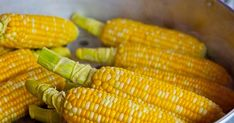 Can cats eat corn? Is corn good for cats? Feeding corn occasionally to your cat is not harmful for his health. Large amounts of corn is not recommended Diet Food List, Food Lists, Corn Recipes, Dog Food Recipes, Appetizer Recipes, Quinoa Soufflé, Colored Corn, Electric Roaster, Best Instant Pot Recipe