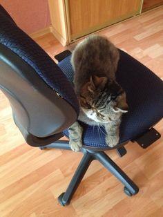 На стуле !