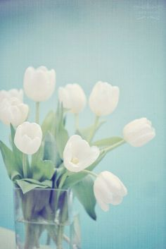 white tulips= new beginnings