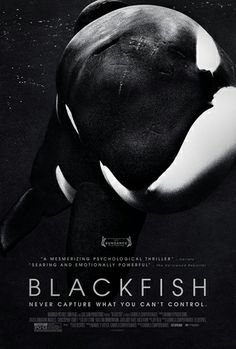 """Watch Tilikum's story. Heart-breaking for humans and animals. PETA says """"free Tilly."""" I'm not sure that would work. So what's to be done with an exploited orca whale that's been driven mad?"""