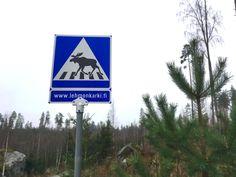 Hirvien suojatie Lehmonkärjessä 11/2016