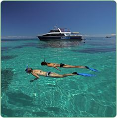 tropicaljourneys.com  Snorkelling off Port Douglas ~ ?GBR.  Killing two birds with one stone really