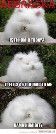 a Laugh? These Animal Memes Should Do the Trick! Need a Laugh? These Animal Memes Should Do the Trick!Need a Laugh? These Animal Memes Should Do the Trick! Funny Animal Memes, Funny Animal Pictures, Funny Animals, Cute Animals, Funny Humor, Memes Humor, 9gag Funny, Sports Pictures, Pet Humor