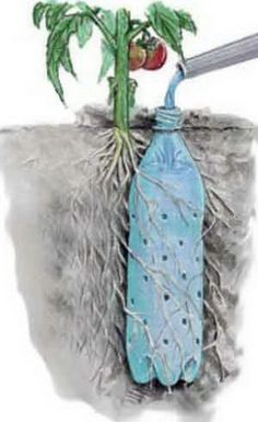 For easy summer watering of those thirsty plant - Just sink an old water/fizzy drink bottle into the ground. Make sure to punch lots of holes right around the sides.