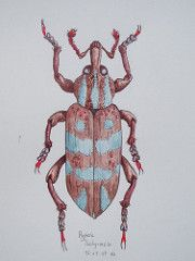 Sunday's Beetle (gnommi) Tags: painting insect drawing originalartwork beetle naturalhistory fantasy watercolour imaginary bizarre inks coleoptera curculionidae insectillustration unnaturalhistory hypera
