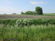 Westpolder -