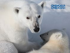 You can now download exclusive One World One Ocean Facebook covers, Twitter backgrounds and wallpapers!