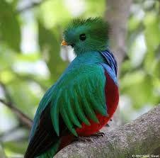 Resultado de imagen para aves hermosas