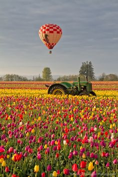 ~ Tractor, Tulips & Balloon...Oh My! © Patricia Davidson