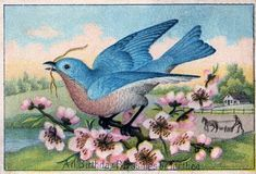 Free Vintage Clip Art - Pretty Blue Bird - The Graphics Fairy