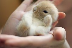 a dwarf bunny would cheer the shit out of me.