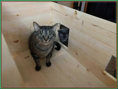 (paid link) cat house outdoor ideas- Makeshift Animal Shelter / Outdoor Pet Feeding Area Here is a simple way to make quick pet shelters or outdoor feeding areas for your cats or other... #cathouseoutdoor Outdoor Cat House Diy, Outdoor Cat Cage, Outdoor Cat Shelter, Outdoor Cats, Feral Cat House, Kitty House, Cat Shelters For Winter, Outside Cat House, Insulated Cat House