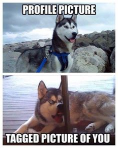 Lol funny humor pictures memes facebook profile fail / animals / dogs