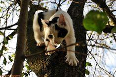 Gaby's Worlld: Ce trebuie să știi înainte să ai o pisică? Animals, Animales, Animaux, Animal, Animais