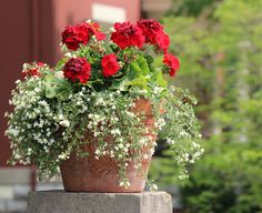 beautiful potted flowers.
