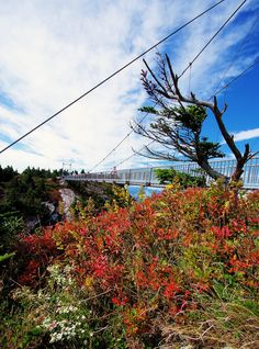 Early fall color at the Swinging Bridge atop Grandfather Mountain, NC #NCFallofFame