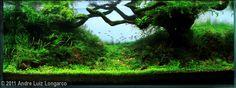 2011 AGA Aquascaping Contest - Entry #313
