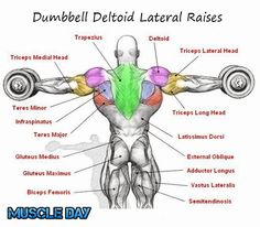 Shoulder Exercises - Dumbbell Deltoid Lateral Raises | Muscle Day