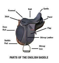 How to fit an English saddle the right way