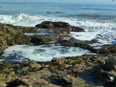 Tide Pools, Santa Cruz, CA