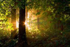 Sunrise Forest, Yorkshire Dales, England  photo via peaceof