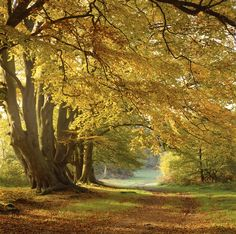 Can you really beat this woodland setting on the Ashridge Estate for an autumn?