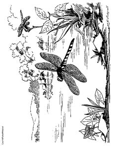 Printable Coloring Page Dragonfly and Butterfly Coloring Page for