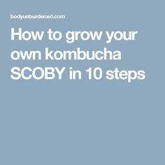 How to grow your own kombucha SCOBY in 10 steps Kombucha Flavors, Kombucha Recipe, Probiotic Drinks, Kombucha Benefits, Kombucha Scoby, Fun Drinks, Healthy Drinks, Healthy Eating, Cold Drinks