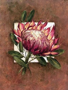 Art Print: Tropical Squares ll by Barbara Mock : Protea Art, Protea Flower, Art Floral, Floral Drawing, Watercolor Flowers, Watercolor Paintings, Bird Paintings, Realistic Rose, Botanical Art