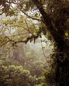 The #jungle is calling... A walk through the #lush #CostaRica cloud forest via @jordanawright! #CostaRicaExperts #vacations #nature