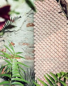 Wall tiles, Botteganove