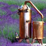 This is a copper still used for distilling lavender buds into lavender essential oil and valuable lavender hydrosol. Many uses, see Seasonal Mary.com