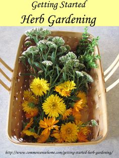 Getting Started Herb Gardening - What herbs should I plant? How Do I Use Herbs for food or medicine? Are herbs difficult to grow? Do herbs n...