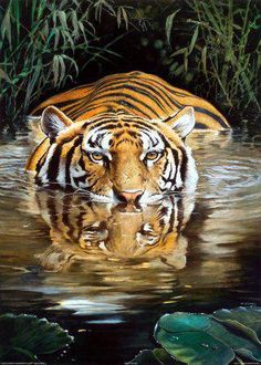 See tiger in the wild