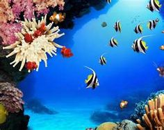 carol reef