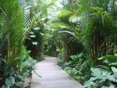 Remarkable tiny back garden ideas uk for your landscaping, - tropical garden ideas