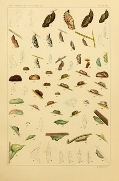 n534_w1150 by BioDivLibrary, via Flickr