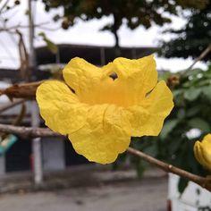 O meu sol em um dia cinza ☁ #flor #flower #natureza #nature #sol #sun #amarelo #yellow ##DiaCinza #GrayDay #EuAmoDiasCinzas #DepressãoSazonal #RioDeJaneiro #RJ #vbatalha