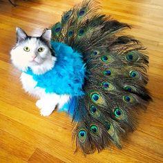 40 Most Adorable Dog Halloween Costumes & DIY Cat Costumes - 40 Best Dog Halloween Costumes & Cat Halloween Costumes Best Dog Halloween Costumes, Cute Cat Costumes, Chat Halloween, Animal Costumes, Pet Costumes, Homemade Halloween, Homemade Costumes, Taco Costume, Kitten Costumes
